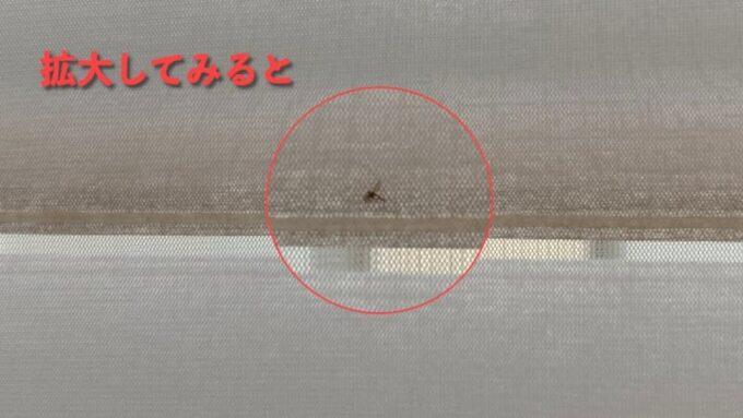 調光ロールスクリーンの隙間に挟まった虫